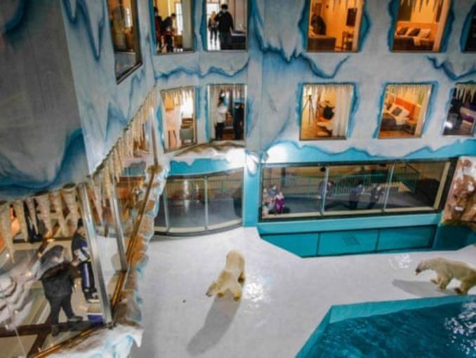 China inaugura hotel con osos polares  ActitudFem