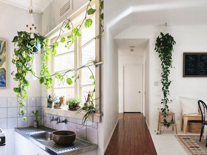 ideas para decorar tu departamento con enredaderas y hacer